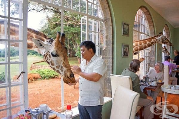 Giraffe Manor / Кения