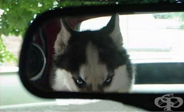 Направете свирепия си поглед, когато отивате на ветеринар.