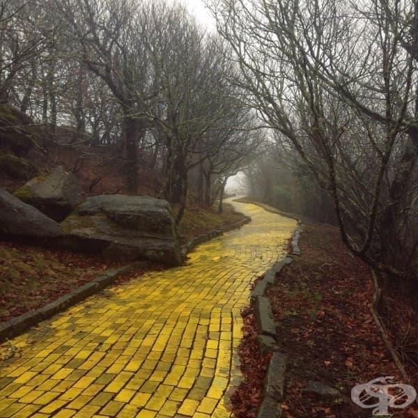 """Пътят от жълти тухли в изоставения тематичен парк """"Земята на Оз"""", Северна Каролина, САЩ"""