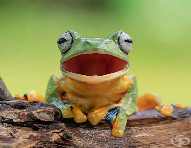 Вижте жабите, както никога досега