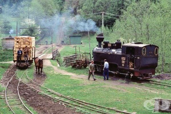 Град Ковасна е важен индустриален център за горското стопанство и производството на дървен материал.