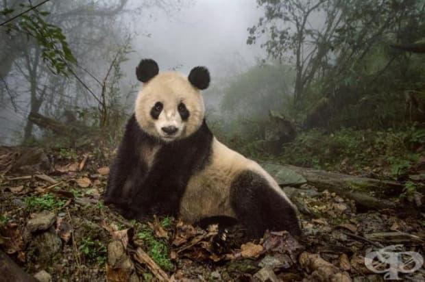 Йе Йе е 16-годишна панда, обитаваща център за диви животни в резервата Уолонг. Символите на името й представят Япония и Китай и символизират приятелството между двете страни.