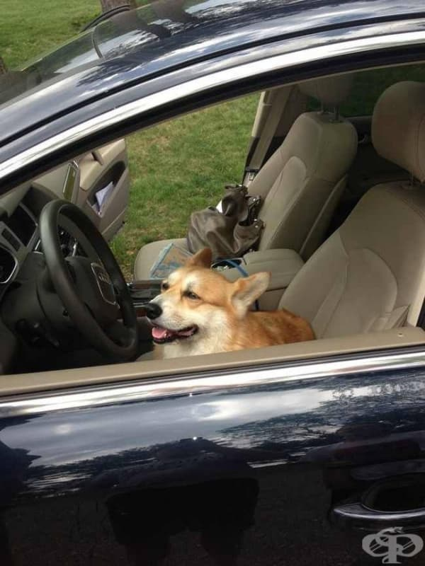 Аз ще карам!