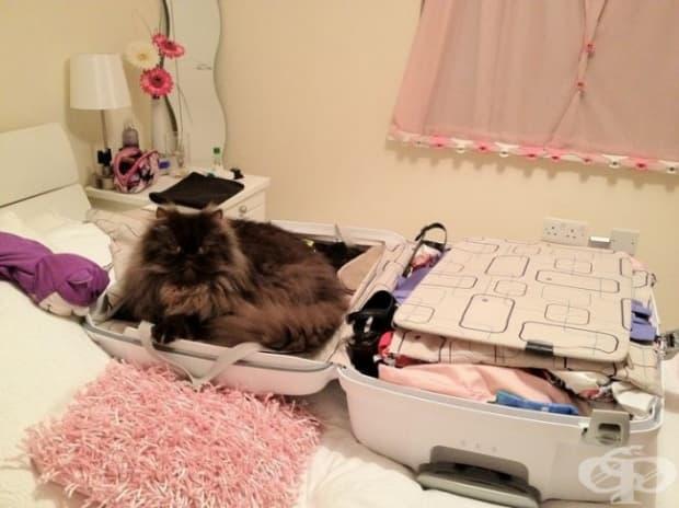Тъй като в куфара ти няма място за мен, предлагам да не ходиш.