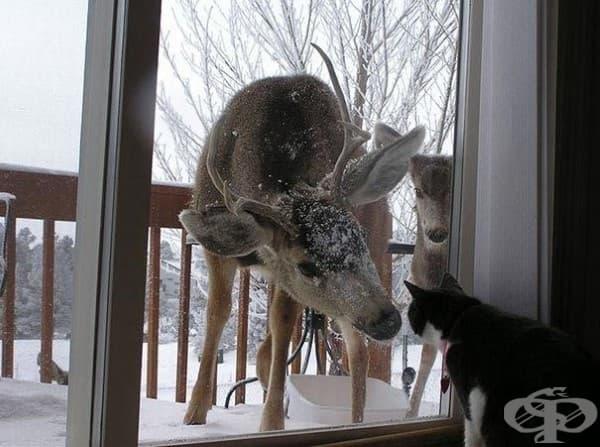 Здравей! Ние сме новите ви съседи.