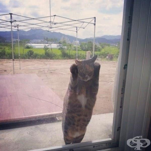 Хей, пусни ме вътре или лошо ти се пише!