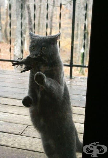 Пусни ме! Нося ти подарък!