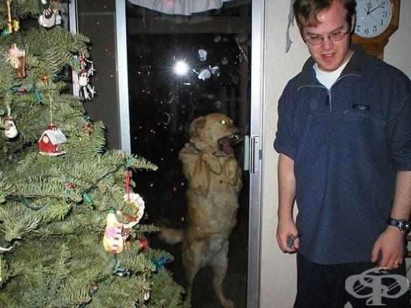 Предполагам, че това куче е обладано от демон.