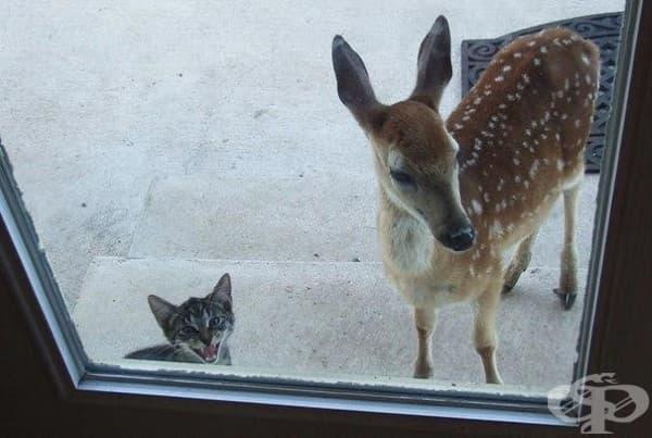 Хеей, отворете вратата, доведох си приятел.