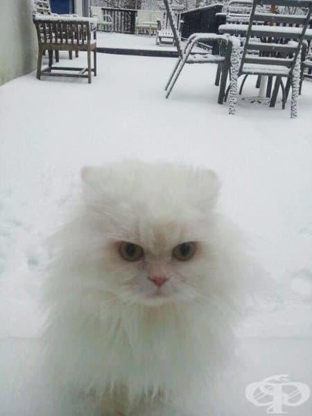 Снежанка не обича зимата.