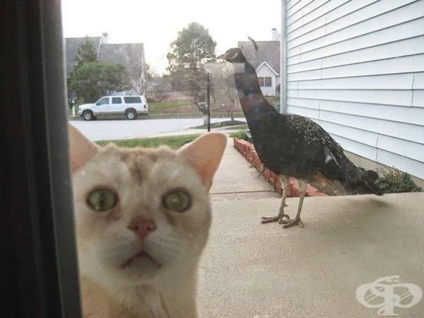 Господарю, пусни ме вътре! Страхувам се от тази ужасна птица…