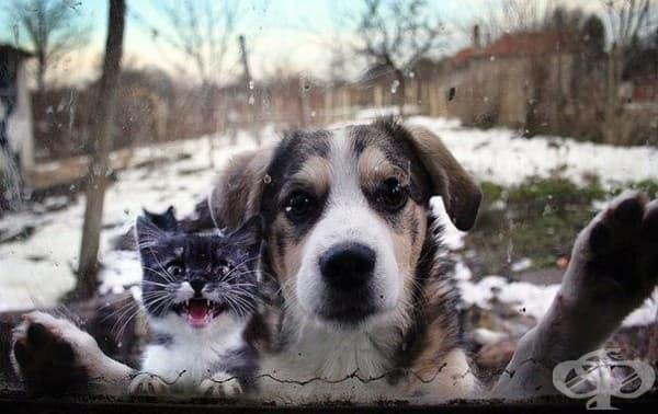 Животът е кофти, ако нямаш котка!