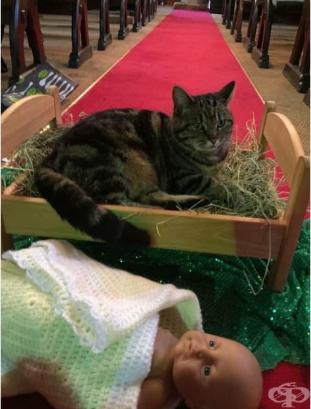 На тази котка не й пука, че е изритала бебето Исус от яслата