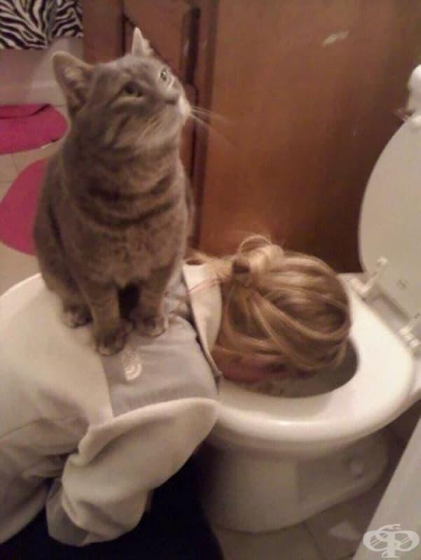На тази котка хич не й пука, че си препила снощи
