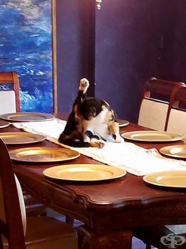 Официална вечеря? Кралицата ще идва ли?