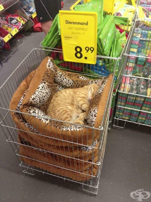 И какво като сме в магазина? Нима не мога да подремна?