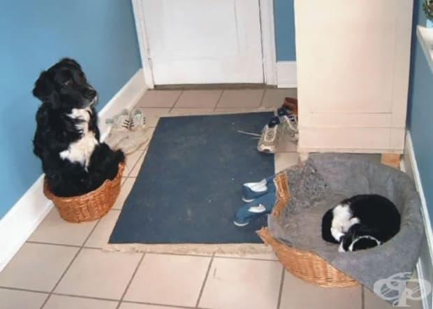 Котка непукист и онеправдано куче