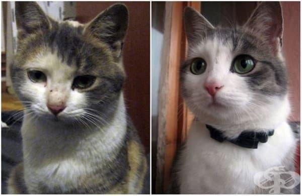 15 домашни любимци преди и след като са взети от приюта за животни