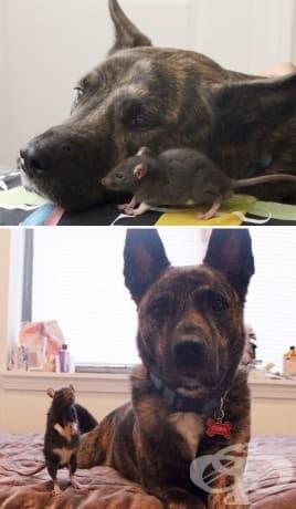 """15 + """"Преди"""" и """"След"""" снимки на животни, израснали заедно"""