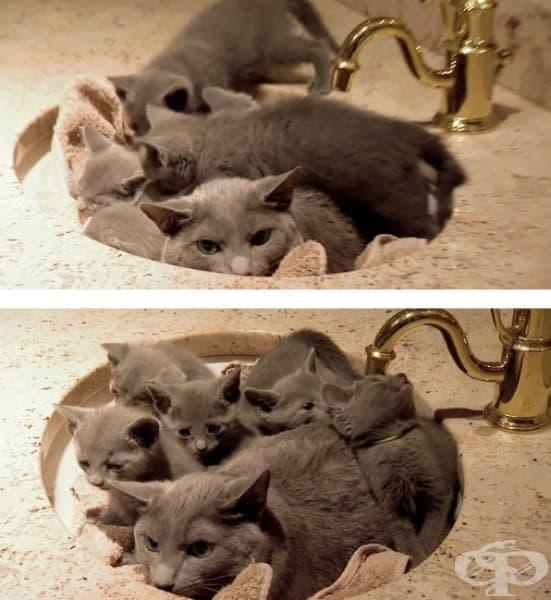 Предполагам, че мивката не беше най-удачното място за почивка...