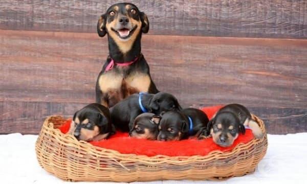 Желая ви щастие и много кученца!