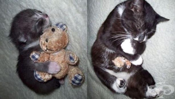 Домашни любимци, които все още спят с любимата си играчка