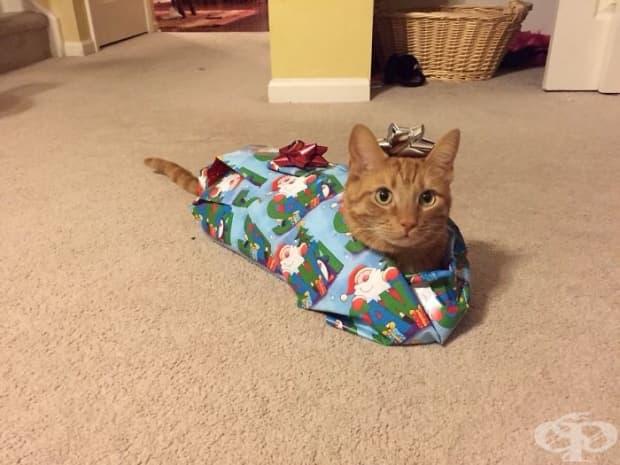 Това е Туикс. Добре че е свикнал с децата по Коледа. Весела Коледа!