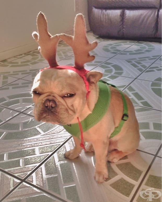 Не всички са толкова ентусиазирани покрай Коледа