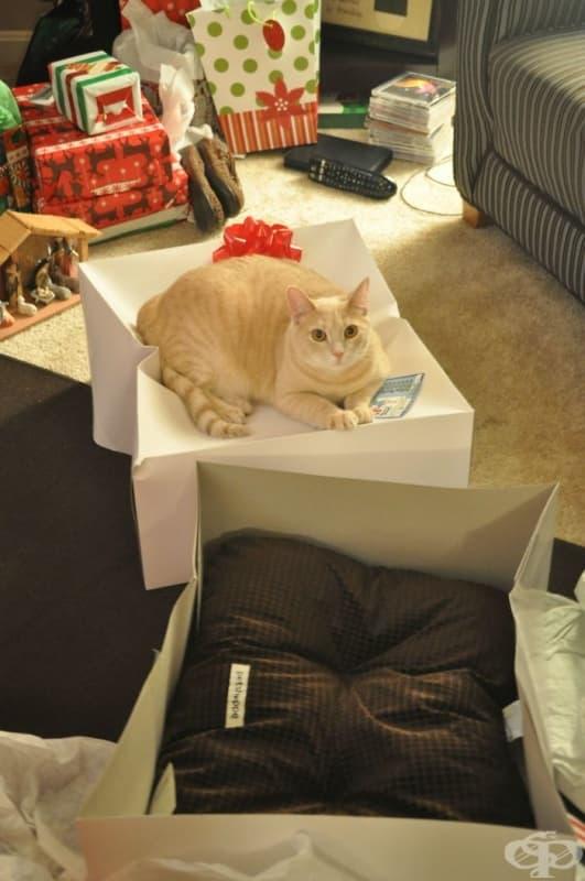 Купих на котката си легло за Коледа