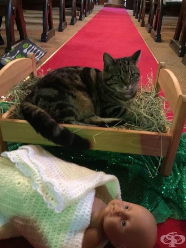 Църковната котка изгони бебето Исус от яслата му…