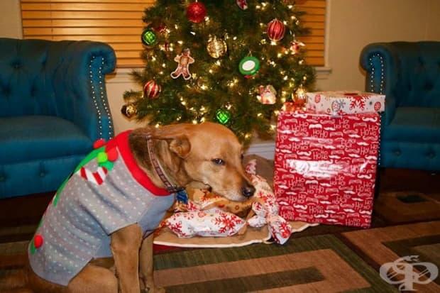Реакцията на кучето на един приятел, когато откри, че коледният му подарък е пуловер