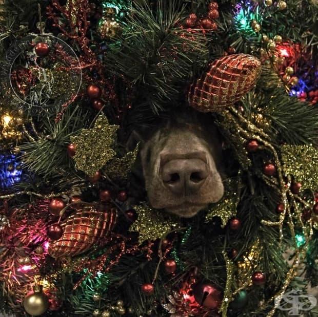 """На първия коледен ден моята истинска любов ми каза """"Кучето е в дървото ни""""…"""