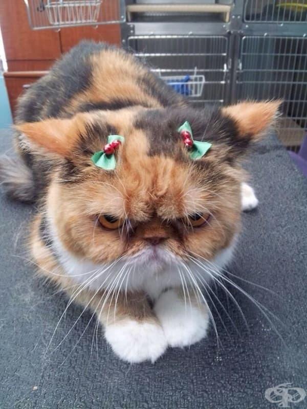 Весела Коледа… хо хо хо!