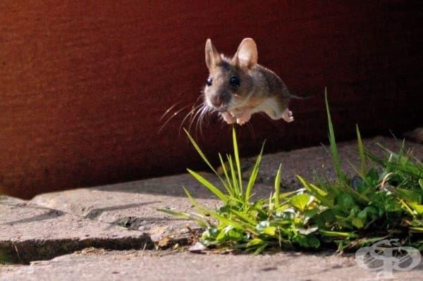 Малък скок за мишките…