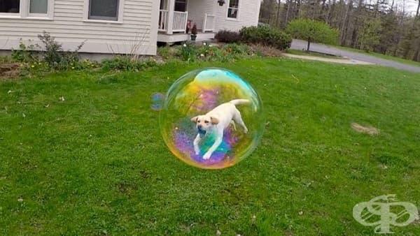 Капан за кучета