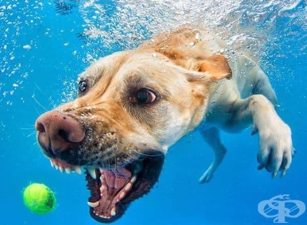 Подводен тенис?