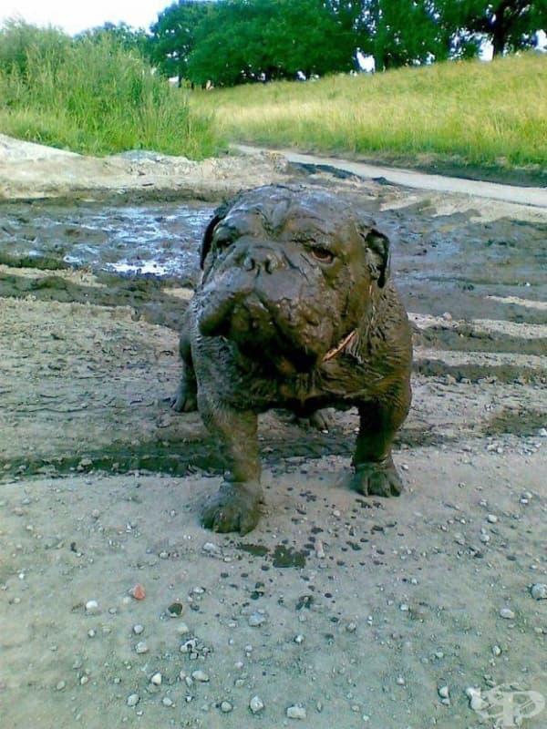 Това куче надушва калта от километри
