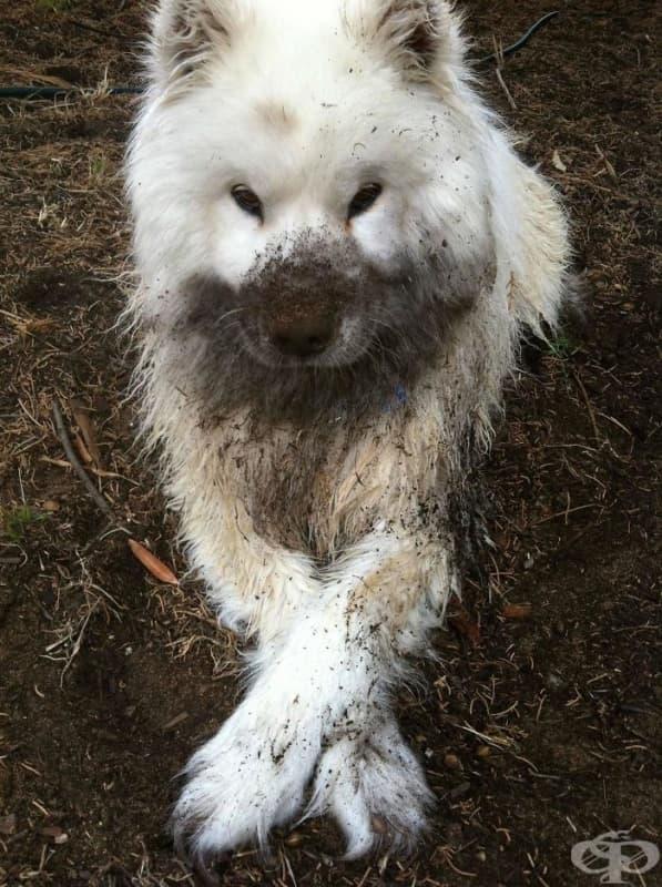 Според един от законите на Мърфи, ако изкъпете кучето си, до броени часове ще ви се наложи да го изкъпете пак.