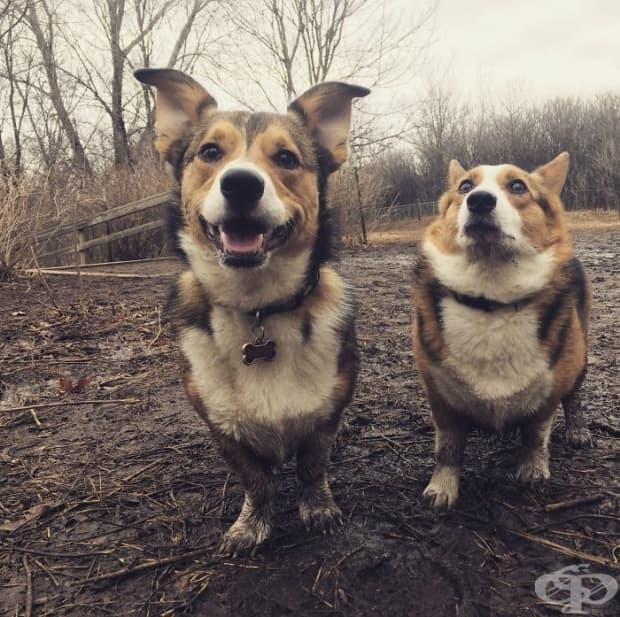 """Можете ли да познаете кое от двете кучета знае какво означава думата """"баня""""?"""
