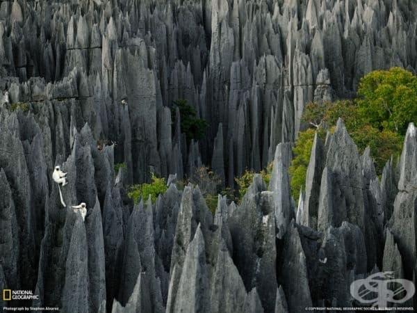 Каменната гора Цинги де Бемарах, Мадагаскар.