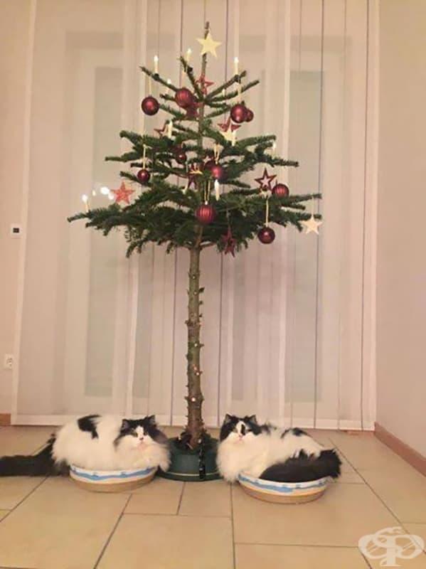 Коледното дръвче е защитено