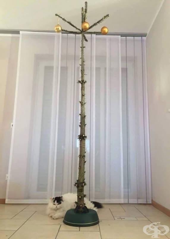 Алтернативно коледно дръвче за собственици на котки