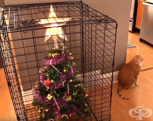 Как да предпазите коледното си дърво от вашата котка? Използвайте клетка. За дървото.