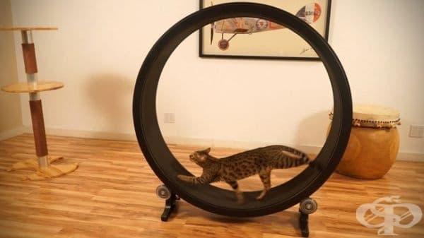 Колело за котешки тренировки.
