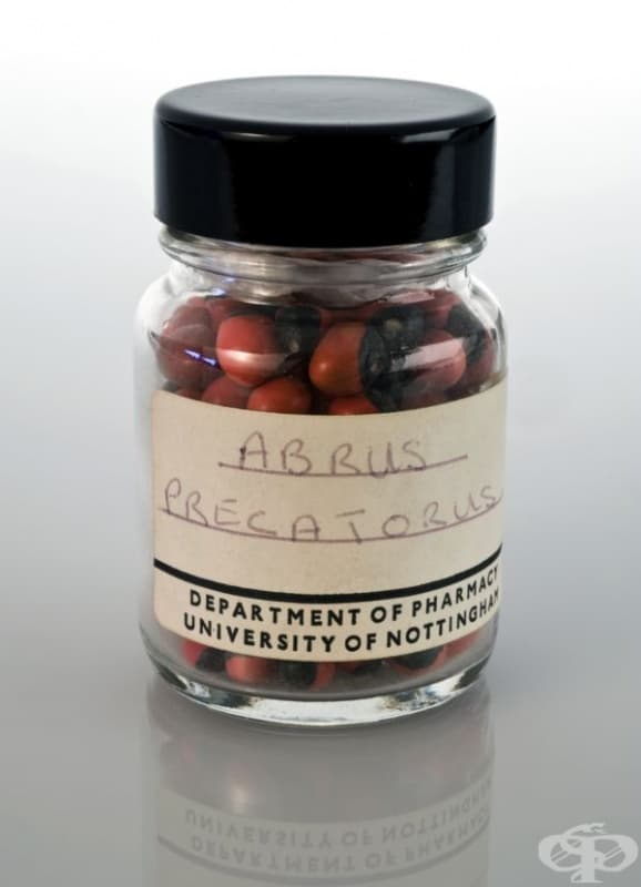Семената от снимката се съхраняват във Факултета по фармация към университета в Нотингам.