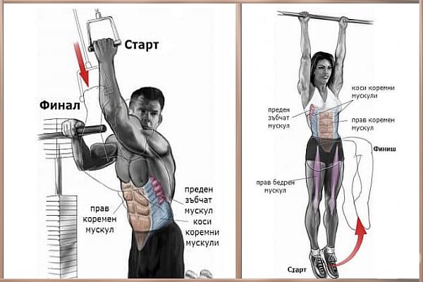 Упражненията за корем и засяганите от тях мускулни групи - изображение