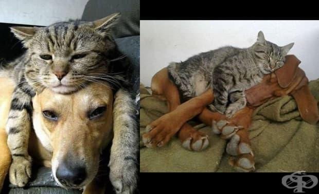 Перфектната двойка: котки, спящи върху кучета