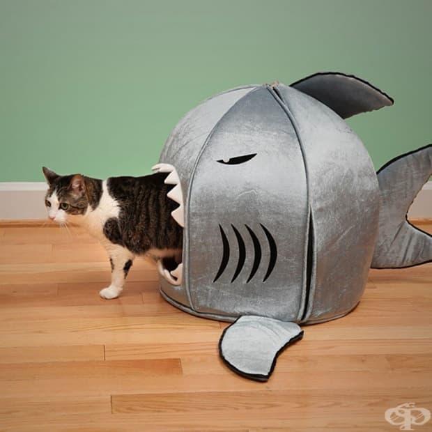 Легло акула