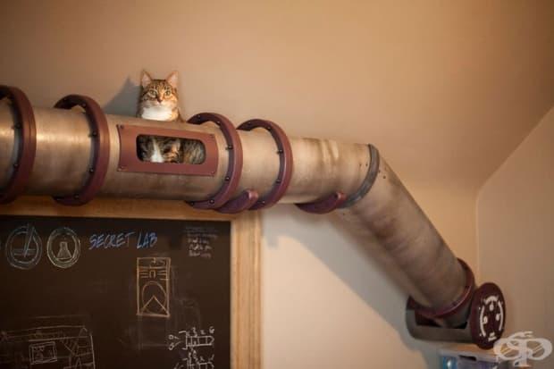 Транзитна система за котки