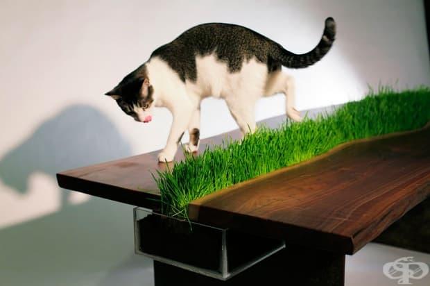 Маса с котешка трева